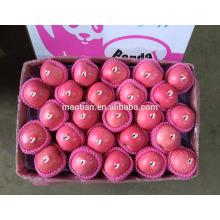 2017 venta caliente Yantai crujiente y Sweet Fresh Fuji manzanas de China