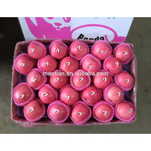 2017 Hot Sale Yantai Crisp & Sweet Fresh Fuji Apples From China