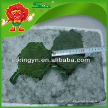 2015 Nouvelle culture 4 à 8 cm de brocoli surgelé Vente en gros de brocolis vert