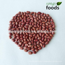 Amandes d'arachides indiennes de haute qualité