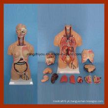 55cm Anatomia humana modelo de torso dupla gênero (15 PCS)