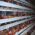Gaiola de frango de camada de alta qualidade à venda