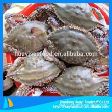 Uma vasta gama de barato azul natação caranguejo