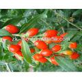 Alta qualidade seca Goji berry