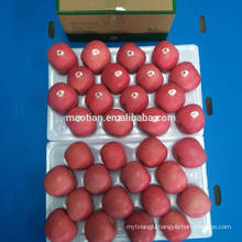 Common Cultivation Type and Pome Fruit Product Type red fuji apple
