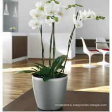 (BC-F1039) Fashionable Design Plastic Self-Watering Flower Pot