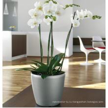 (BC-F1039) Модный дизайн Пластиковый самоосушающийся цветочный горшок