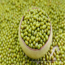 Green Mung Bean 2016 Crop Supply Tamanho diferente