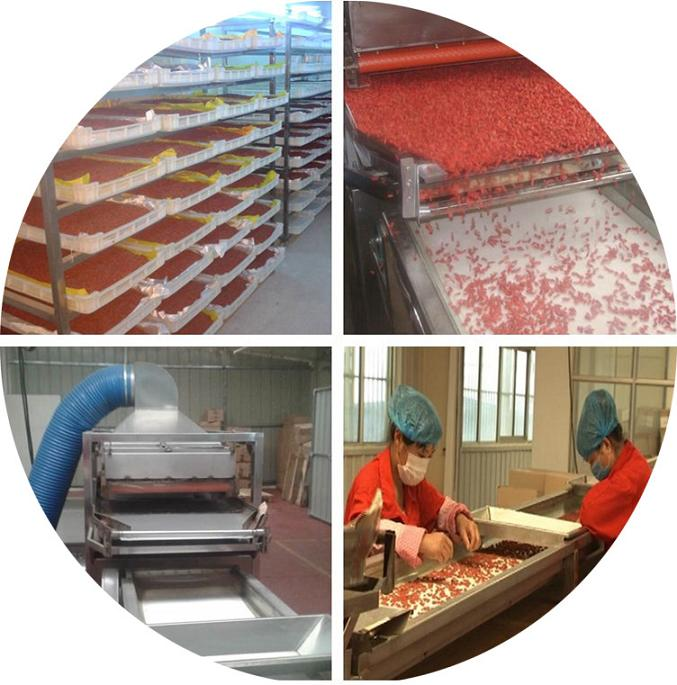 Organic Goji berry process
