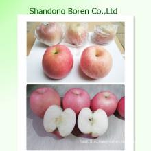 Подавать вам высокое качество FUJI Apple