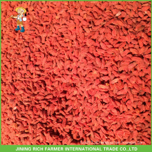 Bagas frescas de goji da China com bom preço