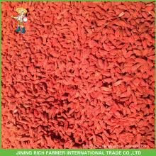 Свежие ягоды goji из Китая по хорошей цене