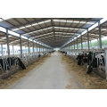 Steel Structure Cattle Arena, Animal House (SS-15253)