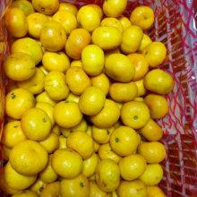 Gute Qualität Süßes Baby Mandarin