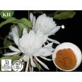 Epiphyllum Extract, Epiphyllum Flowder Extract10: 1, 20: 1