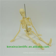 Best-selling PNT-0107 esqueleto modelo anatómico