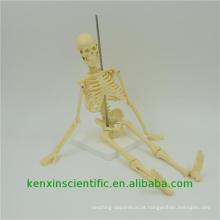Best-seller PNT-0107 esqueleto modelo anatômico