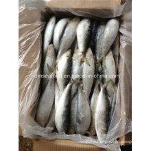 Свежая рыба с сардинами