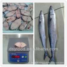frozen spanish mackerel steak