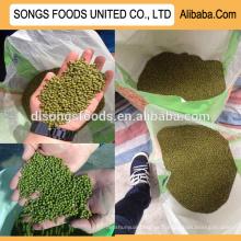 Nova colheita venda quente verde mung beans especificação