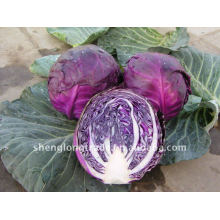 Légume chinois chou violet