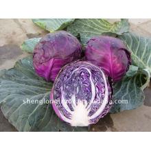 Китайский фиолетовый капуста овощ