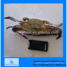 Crabes glacés le prix