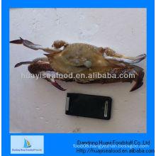 Frozen crabs the price