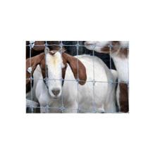 Cerca directa de ganado de campo galvanizado de la venta de la fábrica