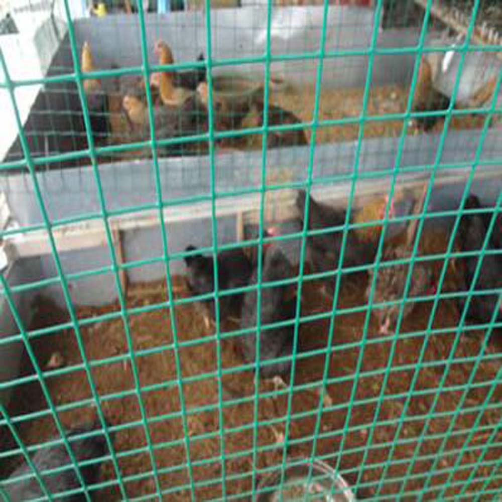 PVC Coated Welded Chicken Cage Wire Mesh China Manufacturer