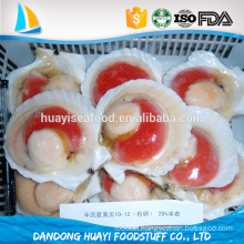 Scallop with roe and half shell/sea scallop /bay scallop