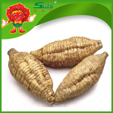 Supply high quality kudzu/kudzu root/kudzu root powder