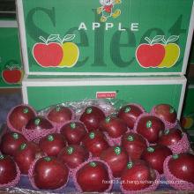Exportação de embalagem padrão de maçã vermelha fresca, Huaniu Apple