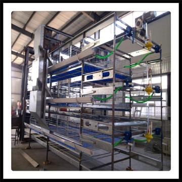 Équipement de cage de volaille H de type H