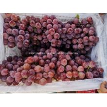 Yunnan Uvas precio bajando