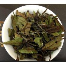 Bienfaits pour la santé Thé blanc Shou Mei (Gong Mei)