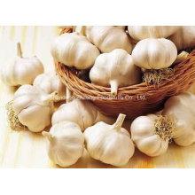 Chinesischer frischer reiner weißer Knoblauch