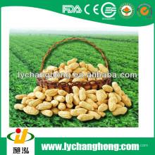 Shandong Ursprungs-Erdnüsse in der Schale 30kg / bag für Verkauf mit niedrigstem Preis