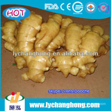 market prices for ginger/export of agriculture products