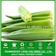 Sementes de quiabo híbrido NOK01 Siqu, preço de sementes de quiabo