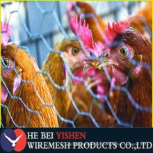 Baixa rolo de malha de fio de galinha para venda com preço de fábrica