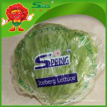Organische runde Form Eisbergsalat