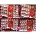Ajo blanco puro 5P * 16 / 5P * 12 bolsa de malla China Jinxiang ajo fresco