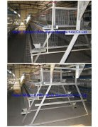 chicken cages for poultry farm(factory)
