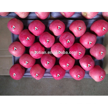 Certificat de GAP et ISO frais de fruit de pomme