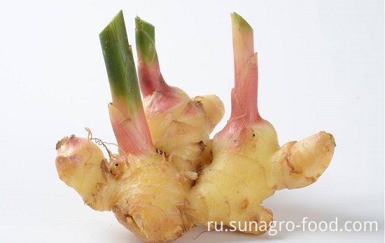 Fresh Mature Ginger