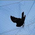 PEHD Agriculture brume Net Anti Netting Brid