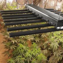 Vertikale Pflanzen Landwirtschaft geführt wachsen Licht 600 Watt