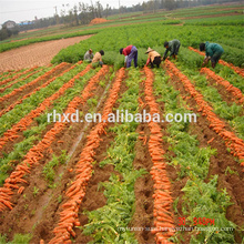 2017 new crops fresh carrot for sale