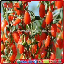 100% органические сушеные ягоды годжи ягоды годжи ГНЦ де г при снижении веса